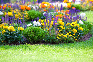 Stock Photo Multicolored Flowerbed On A Lawn Horizontal Shot Small Grip 57091351