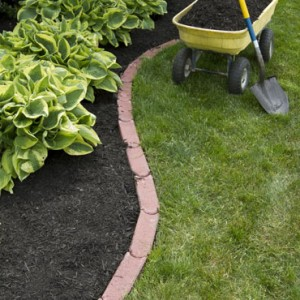 Stock Photo Mulching Bed Around Hostas And Wheelbarrow Along With A Shovel 104220770